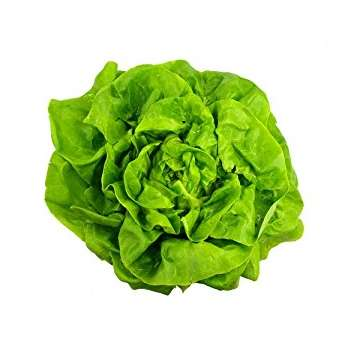 Butter Lettuce from Fresh Online