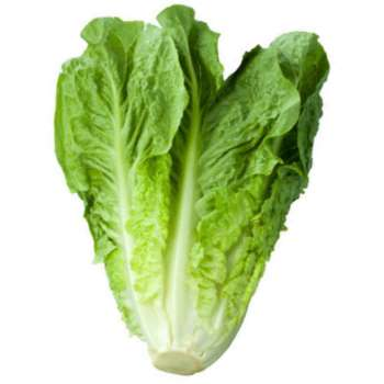 Cos Lettuce from Fresh Online