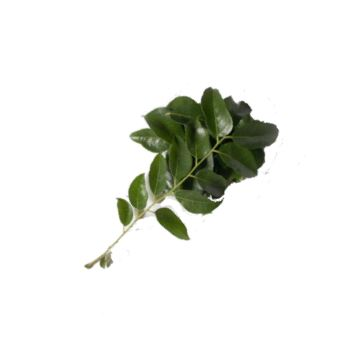 Curry Leaves from Fresh Online