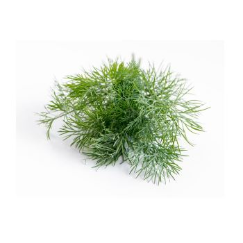 Dill from Fresh Online