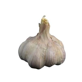 Garlic from Fresh Online