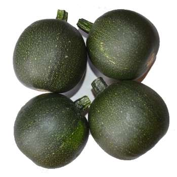 Gem Squash from Fresh Online