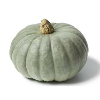 Best Pumkin Prices at Fresh Online