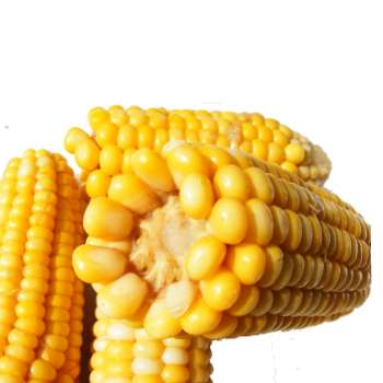 Sweet Corn from Fresh Online